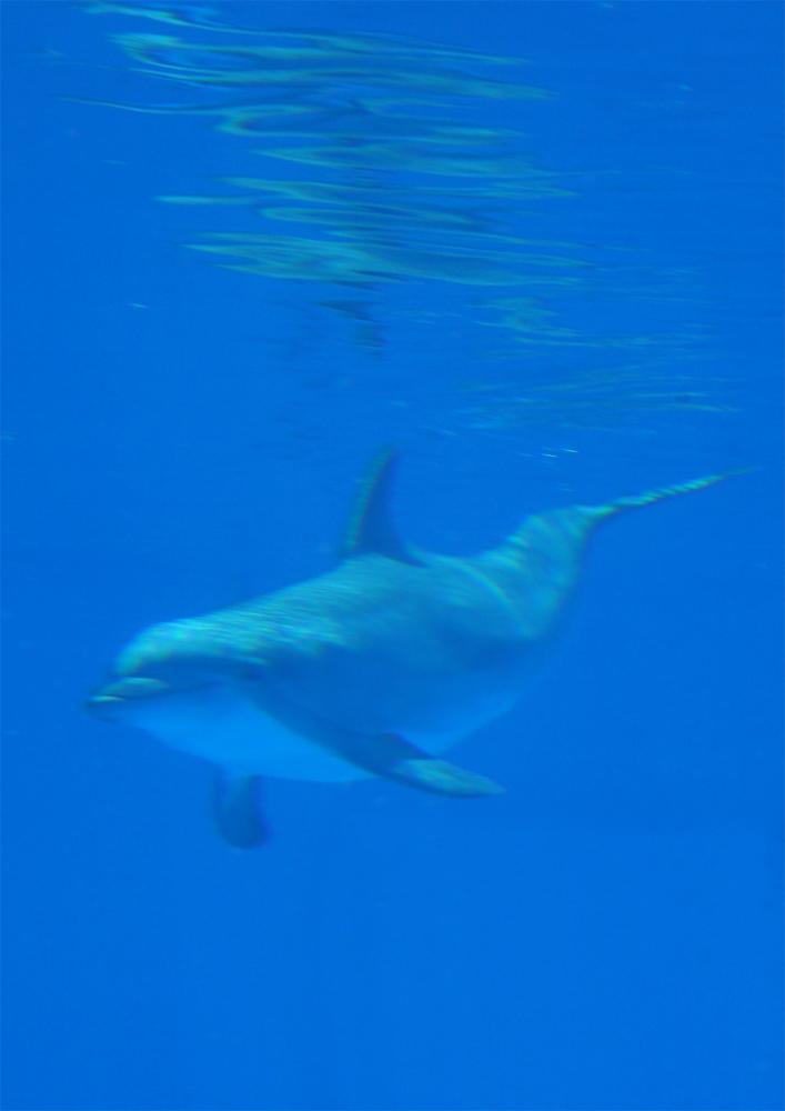 delfin 119